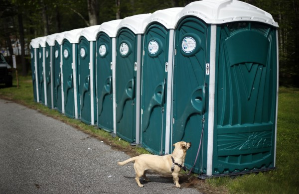A competitor waits for it's master. When nature calls, only the dogs were allowed to use trees at Pineland Farms.