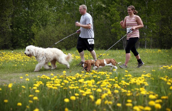 Jason Lawrence runs with Sob while his wife Kerri runs with Nana during the 5K Canicross Race at Pineland Farms Saturday.