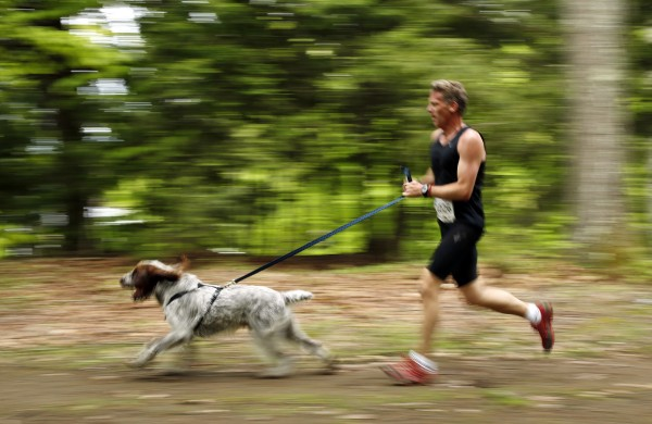 A racer uses a hand-held leash attached to his dog's harness. Leashes attached to collars were not permitted.