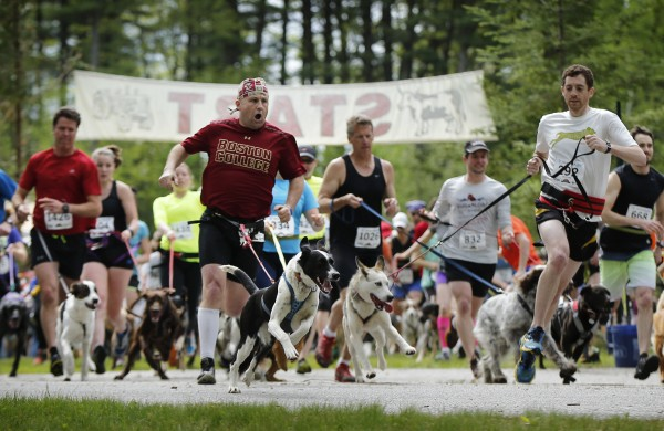 Racers head into the first turn at the start of the race. A small percentage competed to win but most participated simply for the fun of running with the dogs.