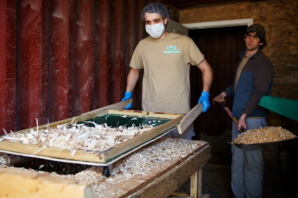 Jordan Adams (left) and Robert Sharood sift wood chips at Mousam Valley's mushroom-growing operation in Springvale recently.