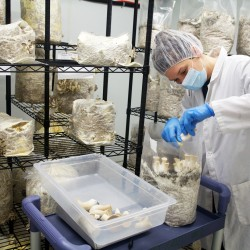 Maine farmers tap technology to grow organic mushroom business