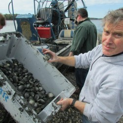 With a cut in clamming licenses looming, Brunswick harvesters consider digging quahogs to save jobs