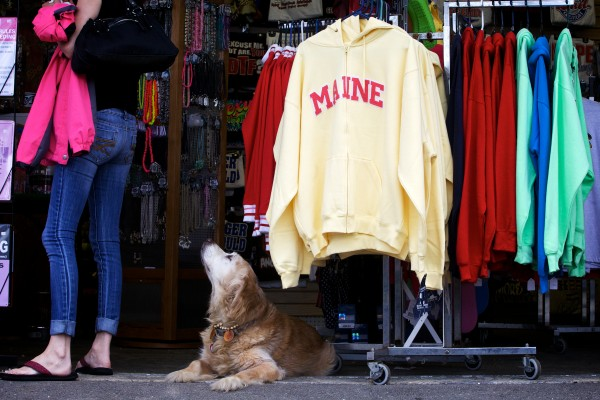 A dog looks up and sniffs a tourist at a seaside shop at Old Orchard Beach Monday.