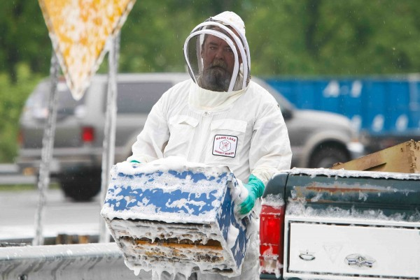 A beekeeper continues to collect beehive containers scattered along I-95 near Newark, Delaware Wednesday.