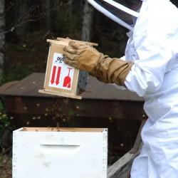 Taking insulation off hive too early proved deadly for bees