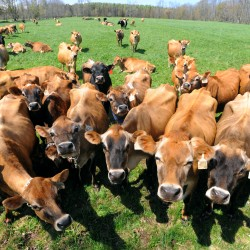 MOO Milk to disband, farmers to pursue other options