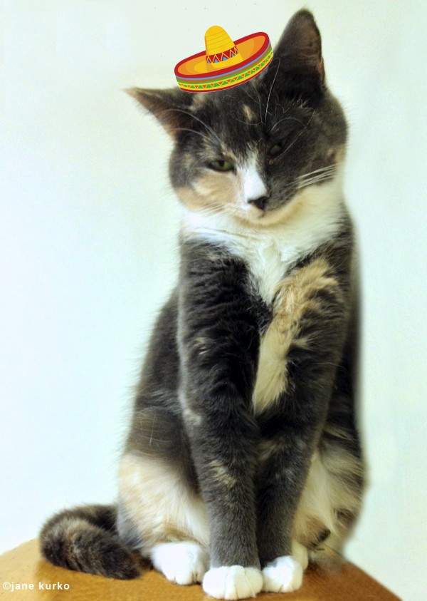 Madison is waiting to be adopted at P.A.W.S. Animal Adoption Center in Rockport.