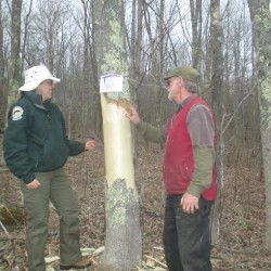 Experts map ash borer infestation in Hudson Valley