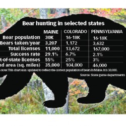 Maine bear management program releases data, says baiting, trapping and hounding necessary to control bear population