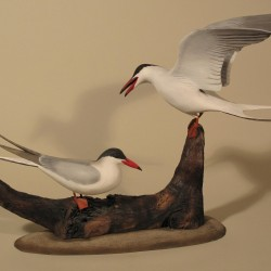 Common Tern Pair, Wendell Gilley 1976