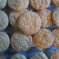 Ginger cookies, straight from the freezer