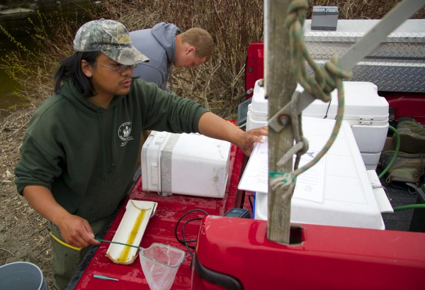 Derik Lee, left, and Andrew Gibbs take measurements and tag Atlantic salmon smolt Thursday afternoon on the Piscataquis River. Lee and Gibbs are a part of a team of Maine Department of Marine Resources biologists that capture, tag and release the smolts in an effort to study the endangered fish.