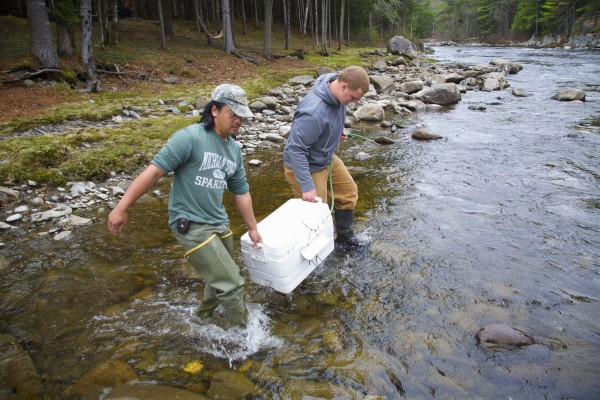 Derik Lee, left, and Andrew Gibbs carry a cooler filled with Atlantic salmon smolts that they captured and tagged Thursday afternoon on the Piscataquis River to release back into the river. Lee and Gibbs are a part of a team of Maine Department of Marine Resources biologists that capture, tag and release the smolts in an effort to study the endangered fish.