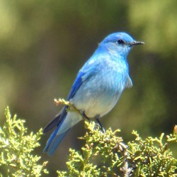 Bluebirds!  A Nature Program at Woodlawn