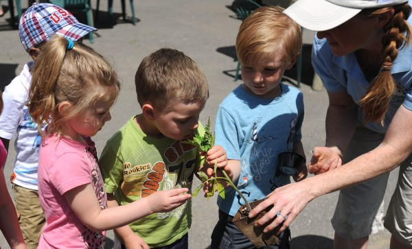 Stephanie O'Neil (right) of the Sea Dog Kid's Garden Club encourages kids in the Bangor YMCA preschool class to smell a tomato plant during the Sea Dog Kid's Garden Club planting day at the restaurant in Bangor on Wednesday morning. O'Neil said that they want to provide kids with hands-on gardening experience to teach them about growing and using vegetables. The restaurant has a teaching garden in North Yarmouth.
