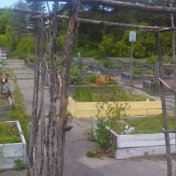 Bangor Community Gardens needs votes to win grant