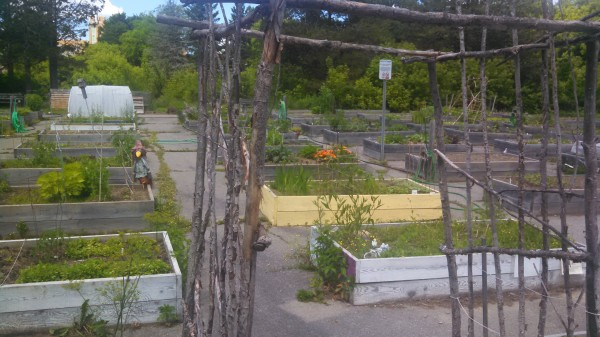 The Bangor Community Garden on Essex Street has entered its fourth season. Now, city officials are considering a second community garden in the city focused on supplying local food cupboards and pantries serving struggling residents and families.