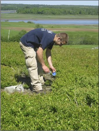 Wesley Woods, a University of Maine student, helps samples bees at a blueberry field in Washington County.