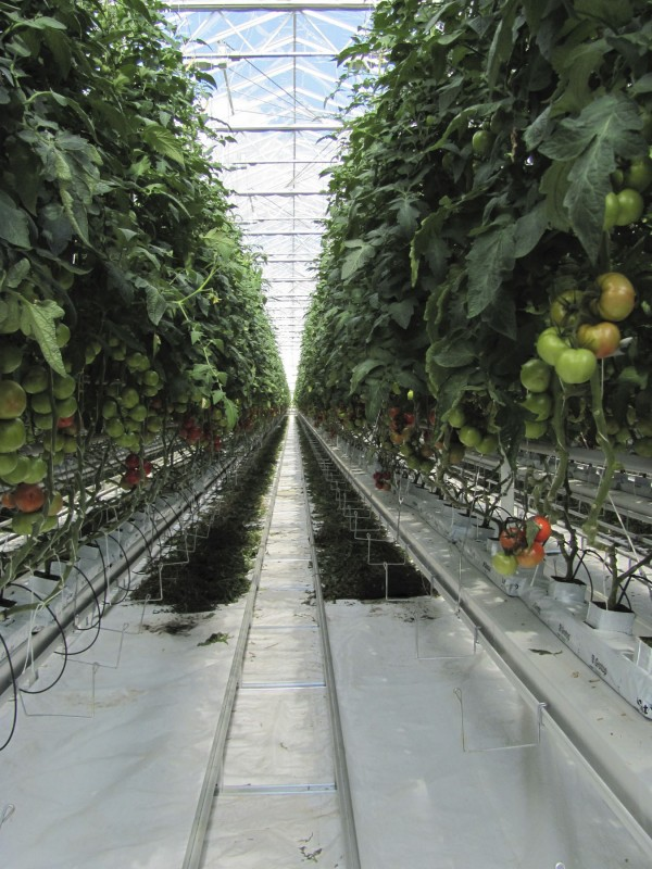 Backyard Farms in Madison is shown in this 2009 photo.