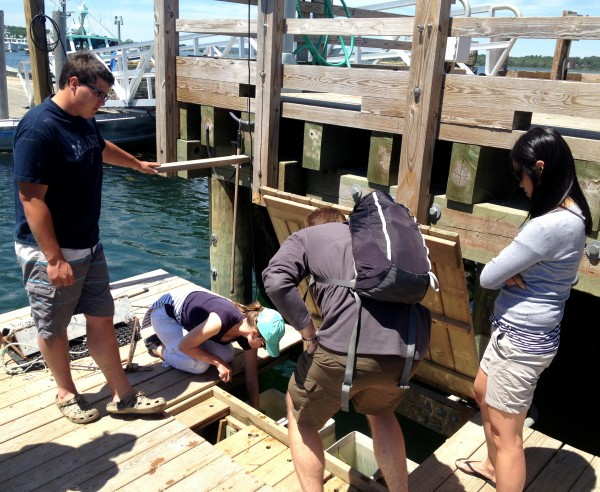 Oyster tours, like the one at Nonesuch Oysters in Scarborough, are a new attraction in the state.