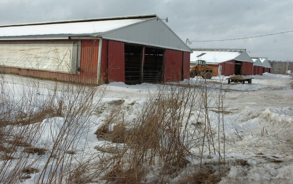 Country Acres Farm Inc. in this February 2007 file photo.