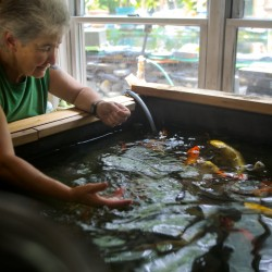 Maine high court rules Harpswell woman can't have exotic fish, but she says 'they're not taking my koi'