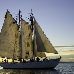 The Schooner Bowdoin, a National Historic Landmark and Official Vessel of the State of Maine, sails in Castine Harbor, 2008.