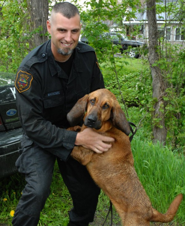 Officer Keith MacKenzie of the Stafford County New Hampshire Sheriff's Department congratulates partner Daisy Mae, after the two tracked down Jesse Marquis Friday morning.