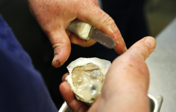 Aragosta line cook Zachary Maccarone shucks oysters recently in Stonington.