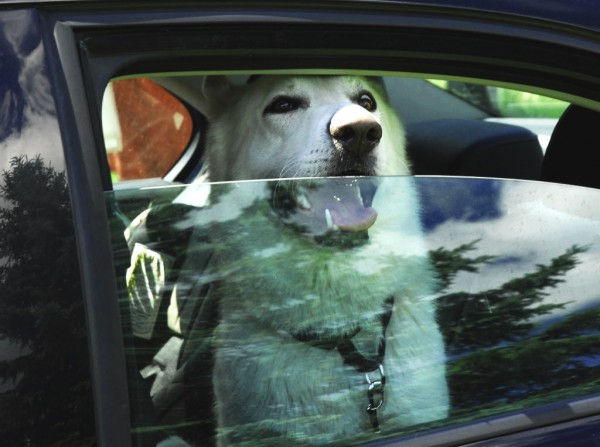 It was all smiles and wagging tails for Gunner as he embarked on the last few miles of a journey that brought him from Tennessee, where he was rescued from an abusive situation, to northern Maine and a new home with Danielle Cote in St. David.