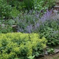 Native Milkweed and Bellflower Sustain the Garden's Bumblebees