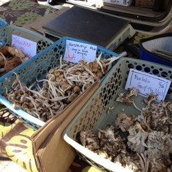 Maine's funky fungi: 'We've been able to sell as many mushrooms as we've been able to grow'