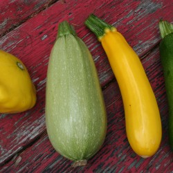 Summer squash types grown in Reeser Manley's garden are (from left) patty pan, cousa, yellow zucchini and green zucchini.
