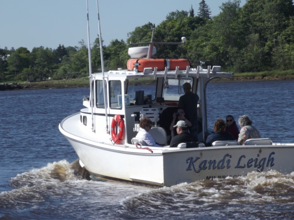 James Robertson of Harrington, captain of the Kandi Leigh, steams away from the Milbridge marina on the Narraguagus River with a load of tourists for a puffin-watching excursion. Robertson is a fisherman and also operates a tour service.