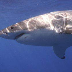 Tour boat guide: Shark was so close 'you could have jumped on its back'