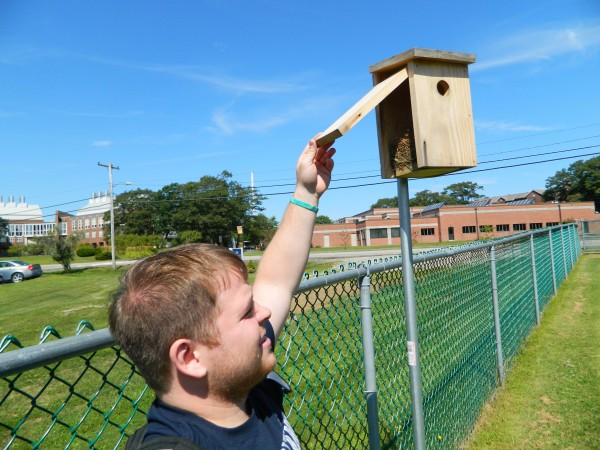 In this August 2013 file photo, Brendan Emanuel from the University of New England looks in on the nest built inside of a birdhouse placed on the perimeter of a school soccer field. Emanuel was part of a team seeking to inventory and control mosquito populations at the Biddeford campus.