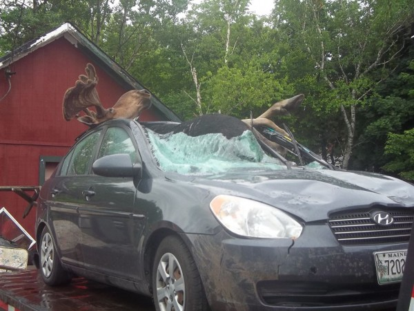 David Richards of Skowhegan survived this accident on July 3 while driving near Monson. The moose ended up inside his Hyundai Accent, but James was up and walking shortly after the crash.