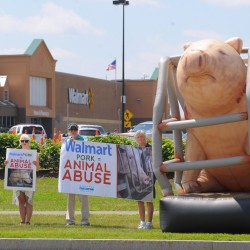 Animal rights protesters at Brewer Walmart speak out against cruelty to pigs