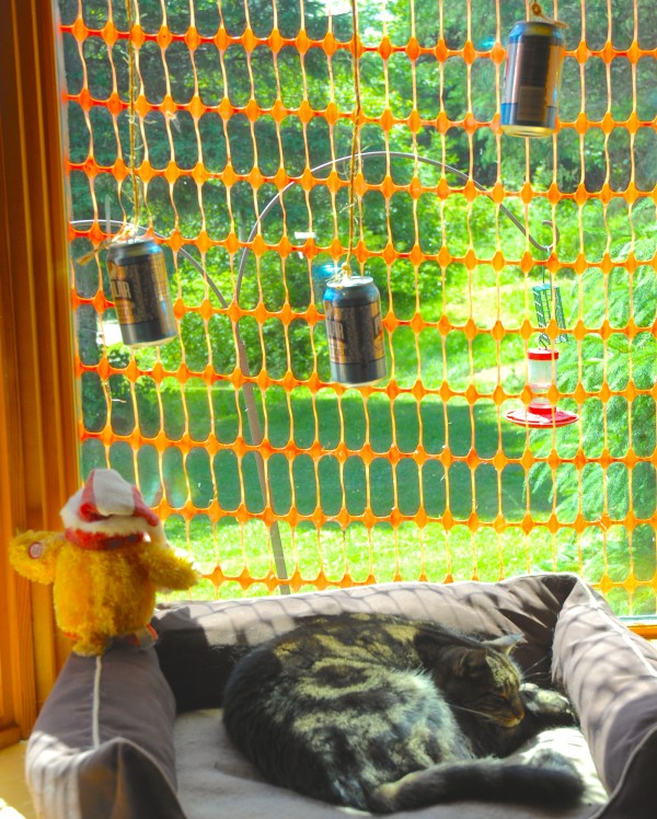 Not sure if it's the guard cat, the toy chicken, the hanging cans or the snow fence, but no attacking birds or zombies have been spotted at Rusty Metal Farm for a few days.