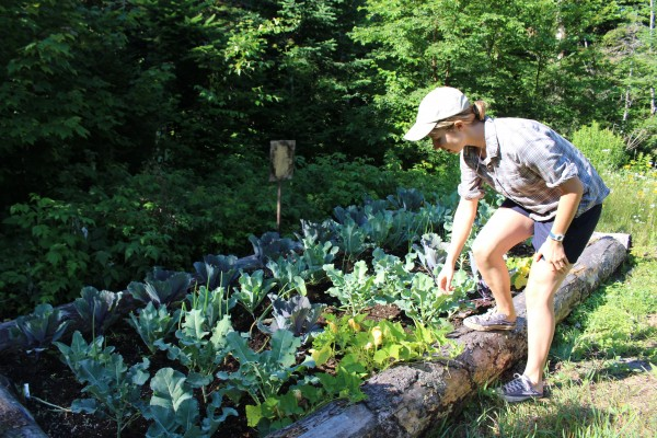 Sarah Carter, one of the hut staff at the Maine Huts & Trails Poplar Stream Falls Hut, checks on the vegetables and herbs growing in one of the hut's raised beds on July 12, 2014. Along with locally-sourced food, the garden's produce is used throughout the year in the hut's rotating dinner and breakfast menu.