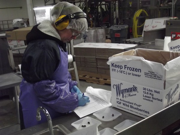 A worker at the Wyman's of Maine processing plant in Cherryfield conducts a quality control inspection on a 30-pound box of frozen wild blueberries in August 2013.
