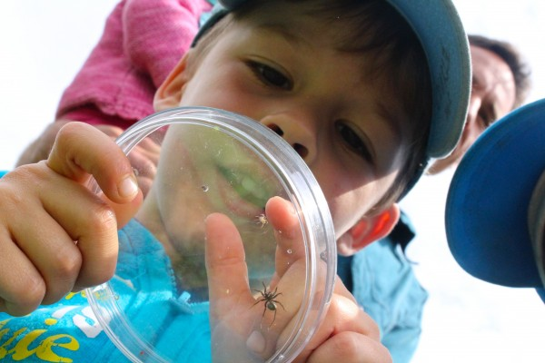 Luke Houssel examines a spider during a family-friendly workshop on Spiders hosted by the Bangor Land Trust at West Penjajawoc Grasslands recently in Bangor.