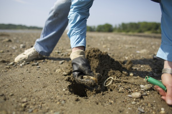 Bob Ramsdell digs up a clam in an area that a federal agency investigated after claims that there is significant pollution.