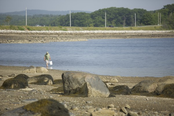 Dale Carlson of Manchester, Connecticut walks the shore of Sears Island in Searsport, Maine looking for clams.