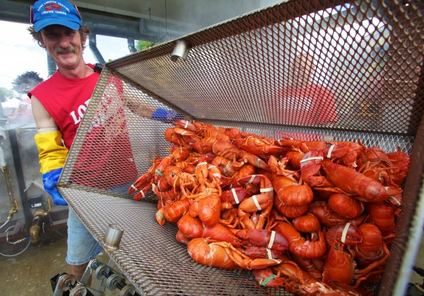 Maine Lobster Festival head lobster cooker Peter Smith unloads a basketful of steamed lobsters in 2012.