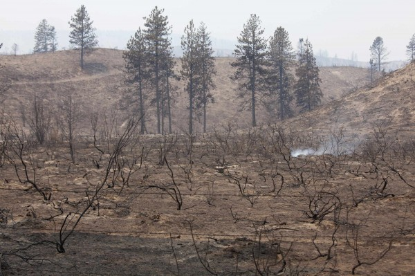 The earth continues to smolder after being burned by the Carlton Complex Fire near Malott, Washington July 20, 2014.