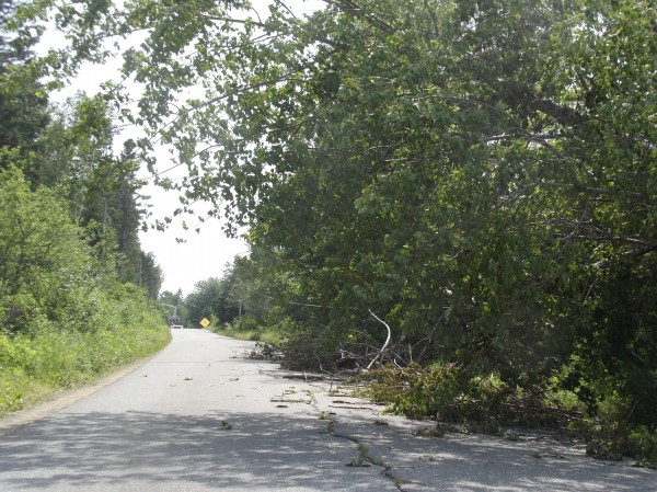 A tree knocked over by Tropical Storm Arthur leans across Wilcox Road in Trescott.