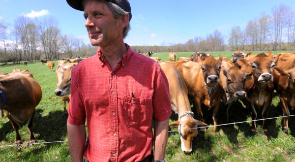 Steve Morrison, who owns Clovercrest Farm, a certified organic dairy farm in Charleston, stands with his cows in this May 2014 file photo. Morrison was selling milk to MOO Milk before the company went out of business.