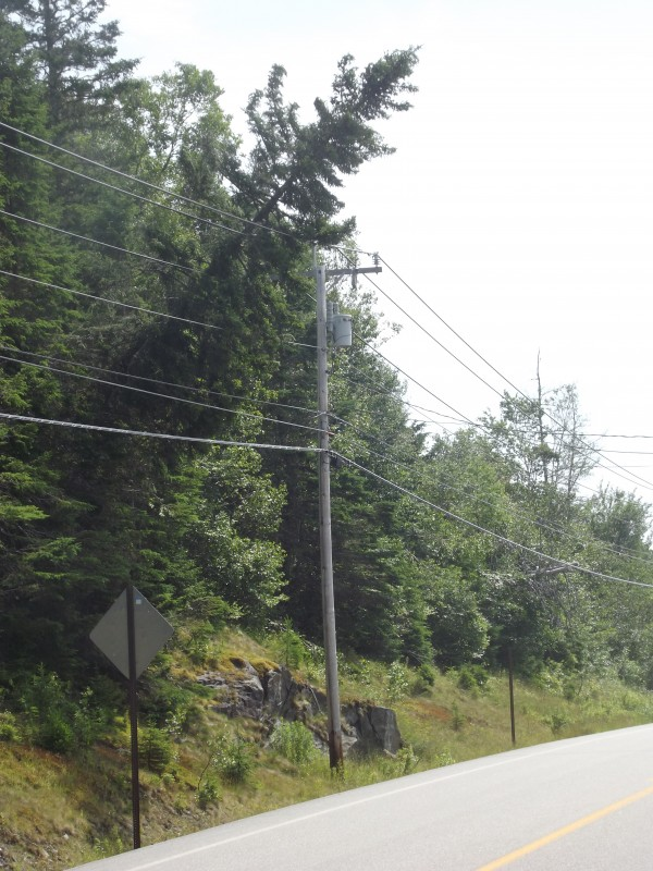 A tree leans precariously against utility wires along Route 189 in Trescott. High winds battered coastal Washington County on Saturday, and a few thousand people remained without power on Monday.